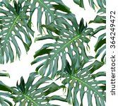 monstera palm leaves on the... | Shutterstock . vector #364249472