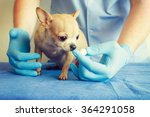 dog veterinarian. | Shutterstock . vector #364291058