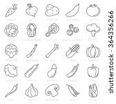 thin line vegetable vector icon ... | Shutterstock .eps vector #364356266