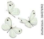Stock photo three white butterfly isolated on white background 364376942