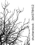 branch silhouette on a white... | Shutterstock . vector #364378412