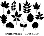 set of vector silhouettes of... | Shutterstock .eps vector #36456619