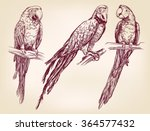 parrot set isolated hand drawn... | Shutterstock .eps vector #364577432