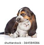 Basset Hound Puppy Biting Tiny...