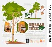 rubber tree or hevea... | Shutterstock .eps vector #364654526