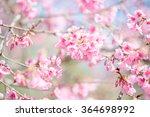 sakura tree | Shutterstock . vector #364698992
