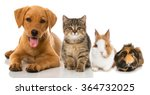 pets | Shutterstock . vector #364732025