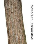 tree bark texture isolated on...