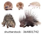 Porcupines And Hedgehogs Set...