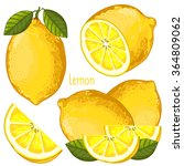 lemon isolated vector on white... | Shutterstock .eps vector #364809062