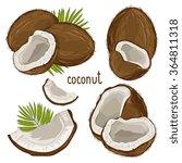 coconut isolated closeup vector ... | Shutterstock .eps vector #364811318