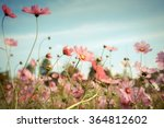 cosmos flower blossom in garden | Shutterstock . vector #364812602