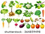 Various Kind Of Vegetables...
