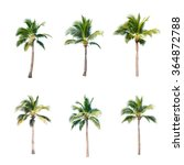 Stock photo coconut trees on white background 364872788