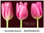 spring pink tulips. fully... | Shutterstock .eps vector #365046032