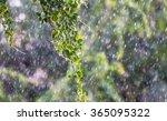 Tree On Raining