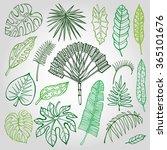 tropical palm leaves set.vector ...   Shutterstock .eps vector #365101676