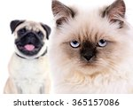 angry cat and happy dog ... | Shutterstock . vector #365157086