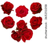 collage of red roses isolated on white background - stock photo