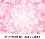 cherry spring flower background   Shutterstock .eps vector #365302556