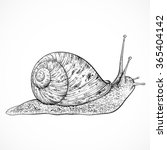 Snail. Vintage Hand Drawn...
