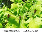 Three Dragonflies Sitting On...
