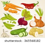 mixed vegetable vector... | Shutterstock .eps vector #365568182