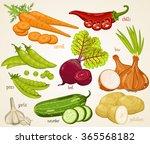 mixed vegetable vector... | Shutterstock .eps vector #365568182