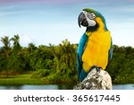 Blue And Yellow Macaw On The...