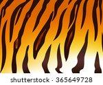detail of tiger skin pattern | Shutterstock .eps vector #365649728