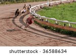 Greyhound racing - stock photo