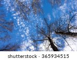 cirrocumulus clouds. view from... | Shutterstock . vector #365934515