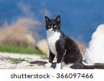 Black Cat Sit On A Green Grass