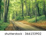 Forest Path  Vintage Look