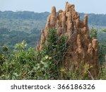 Termite Mound Congo