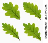 set green oak leaf. silhouette... | Shutterstock .eps vector #366298925