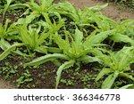 vegetable garden | Shutterstock . vector #366346778