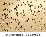 fine image of lots of birds fly ... | Shutterstock . vector #36639586