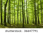 sunlight in the green forest ... | Shutterstock . vector #36647791