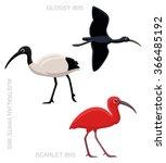 Bird Ibis Set Cartoon Vector...