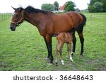 Horse feeding her foal on a green meadow - stock photo