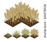 Wheat Isometric Illustration....