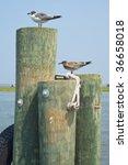 Seagulls On Pilings In Virginia