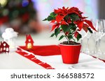 Christmas Flower Poinsettia On...