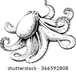 octopus  vector illustration ... | Shutterstock .eps vector #366592808