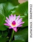 Lotus For Conceptual Purpose