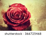 Stock photo old vintage grunge background with red rose 366725468