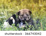 Stock photo cute puppy playing in the grass 366743042