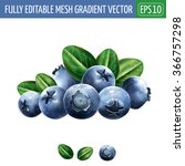 blueberries with leaves | Shutterstock .eps vector #366757298