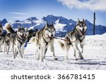 Musher Dogteam Driver And...